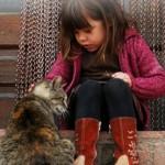 Kitty-Companion