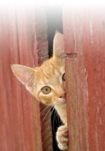 Pet cat looking through crack in door.