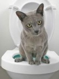 july newsletter 2 cat urinary issues